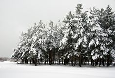 Snowy pine bluff stock photos