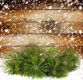 Snowy pine branch on the background Stock Image