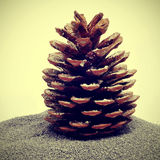 Snowy pine cone Stock Images