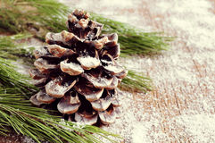 Snowy pine cone Stock Image