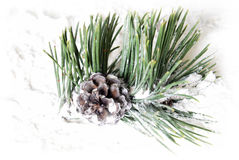 Snowy Pine Cone Royalty Free Stock Images