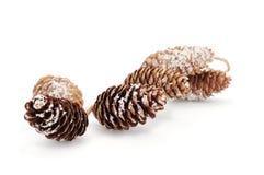 Snowy pine cones Royalty Free Stock Photos
