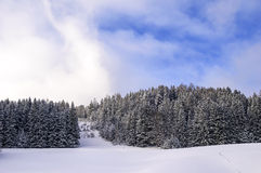 Snowy pine forest Royalty Free Stock Photography