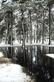 A snowy winter wonderland in the forest Royalty Free Stock Photo