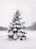 Snowy pine tree Stock Photography