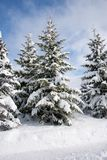 Big pine tree with lots of snow on it in the village warth austria royalty free stock photos