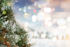 Snowy pine tree Royalty Free Stock Photography