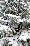 Snowy Pine Tree Stock Photo