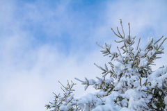 Snowy pine tree under blue cloudy sky Stock Images
