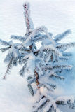 Snowy Pine Tree at Winter Forest Royalty Free Stock Photos