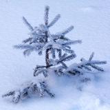 Snowy Pine Tree Stock Photo