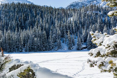 Snowy Pine Trees Border Snow Covered Lake Stock Images