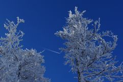Snowy pine trees on the mountains with an airplain. In Harghita mountains Romania Royalty Free Stock Photo