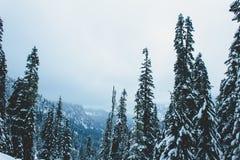 Snowy pine trees, Snow Lake, Washington. Snow covered pine trees on hillside near Snow Lake, Washington, USA stock photography
