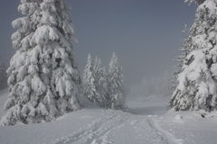 Snowy pines Royalty Free Stock Photography