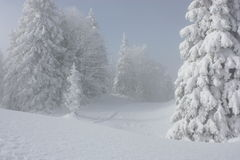 Snowy pines. Standing in a beautiful white landscape in Jura montains Stock Photos