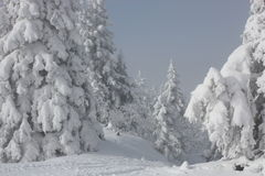 Snowy pines. Standing in a beautiful white landscape in Jura montains Stock Images