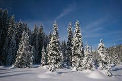Snowy pines Stock Photos