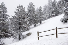 Free Snowy Pines On A Steep Slope By A Fence Royalty Free Stock Images - 13323709