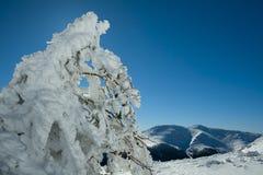 Snowy-Pinus sylvestris im Nationalpark Guadarrama-Strecke Stockbild