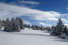 Snowy Plain in the Jeseniky Mountains Royalty Free Stock Photo