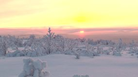 A snowy plain with low vegetation on the background of the rising sun. stock video
