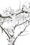 Snowy plants at the end of February following the effects of the Siberian mass of air reached in southern Italy in Campania. Italy Royalty Free Stock Photography
