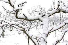 Snowy plants at the end of February following the effects of the Siberian mass of air reached in southern Italy in Campania. Italy Stock Images