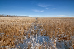 Snowy Prairie Landscape. Snow covered prairie landscape Royalty Free Stock Images