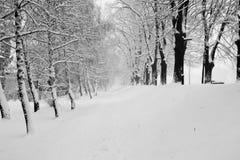 Snowy promenade Serbia. Winter snowy promenade in Pirot Serbia royalty free stock image