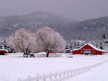 Snowy Ranch and Horses stock photo