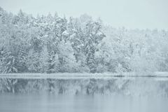 Snowy reflections first winter day 2017-12 -01  Stock Images