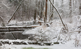 Snowy riparian forest over river Royalty Free Stock Image