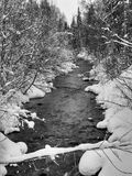 Snowy river. Black and White snowy forest through which a cold river flows Stock Image
