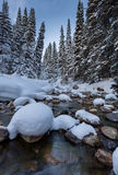 Snowy river with pine trees. This photo was taken in Little Cottonwood Canyon in Utah Royalty Free Stock Photos