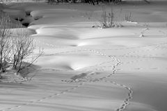 Snowy river. Small river covered by snow with animal tracks Stock Photo