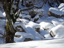 Snowy riverbed. On this photo is snowy riverbed. In the foreground is a tree. Photography was made in the winter in Jachenau, Upper Bavaria, Bayerische Voralpen Royalty Free Stock Images