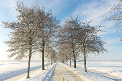 Snowy road. A sunny winter day in Dutch landscape Royalty Free Stock Image