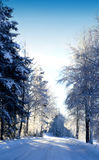 Snowy road... Royalty Free Stock Image