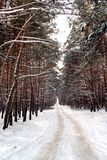 Snowy road. To a winter pine wood Stock Photo