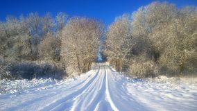Snowy road. big trees in the snow. Frosty sunny day. branches of bushes under the snow stock photo