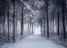 Snowy Road through the cold wintry forest Stock Image