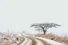 Snowy road in countryside. Snowy road receding past lone tree in countryside with blizzard in background, winter scene Royalty Free Stock Image