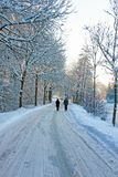 Snowy road in the countryside from the Netherlands. In winter Royalty Free Stock Photos
