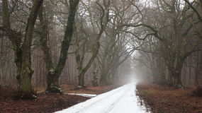 Snowy road. In the dark forest Stock Image