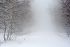 Snowy road in fog. Gy forest stock image