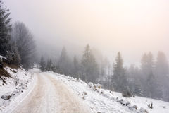 Snowy road through foggy spruce forest. Winter mountain landscape. road that leads into the spruce forest covered with snow on a foggy day royalty free stock image