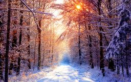 Snowy road through forest Royalty Free Stock Images
