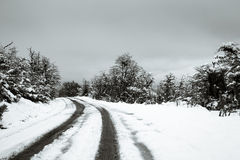 Snowy road in the forest Stock Images