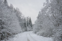 Snowy road in forest Royalty Free Stock Photos